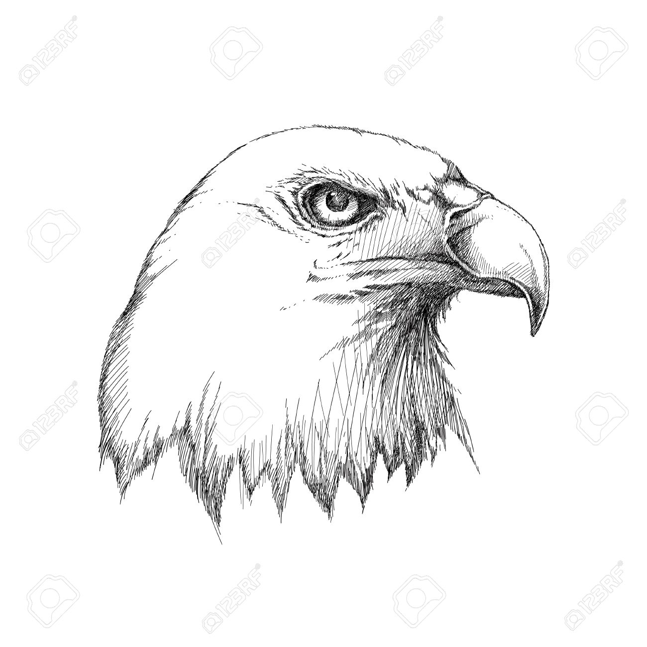 sketch of bald eagle head profile in black isolated on white