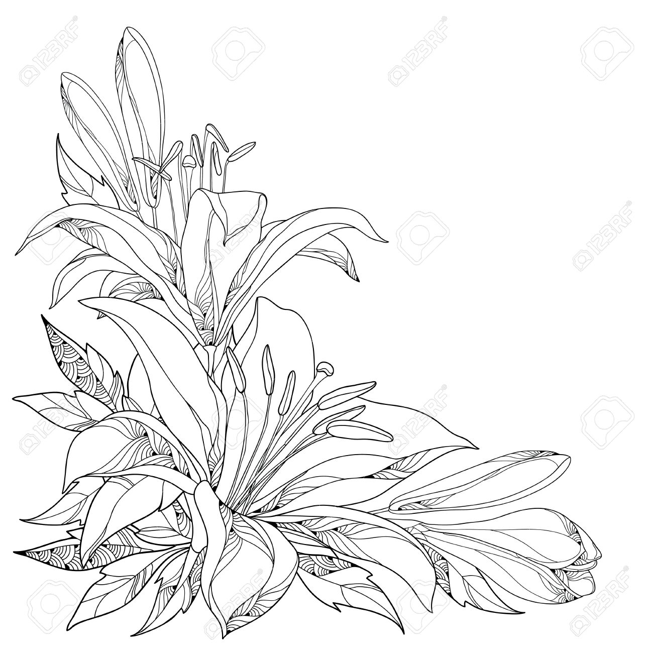 Vector Bouquet With Ornate White Lily Flower Buds And Leaves