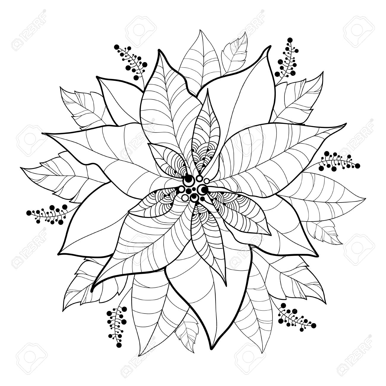 Vector Poinsettia Flower Or Christmas Star In Black Isolated