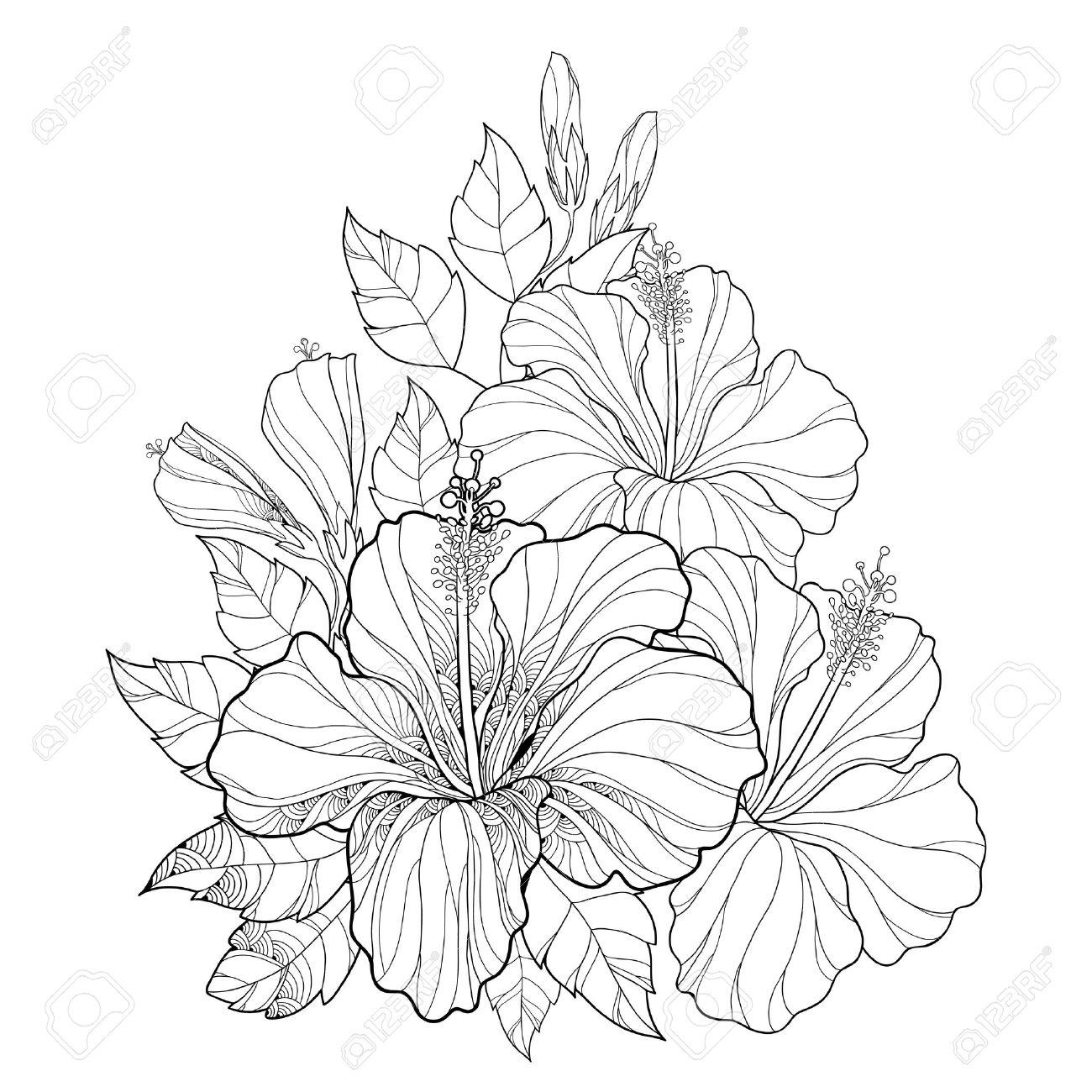 Vector El Ramo Con El Hibisco Chino O Hibiscus Rosa-sinensis. Flor ...