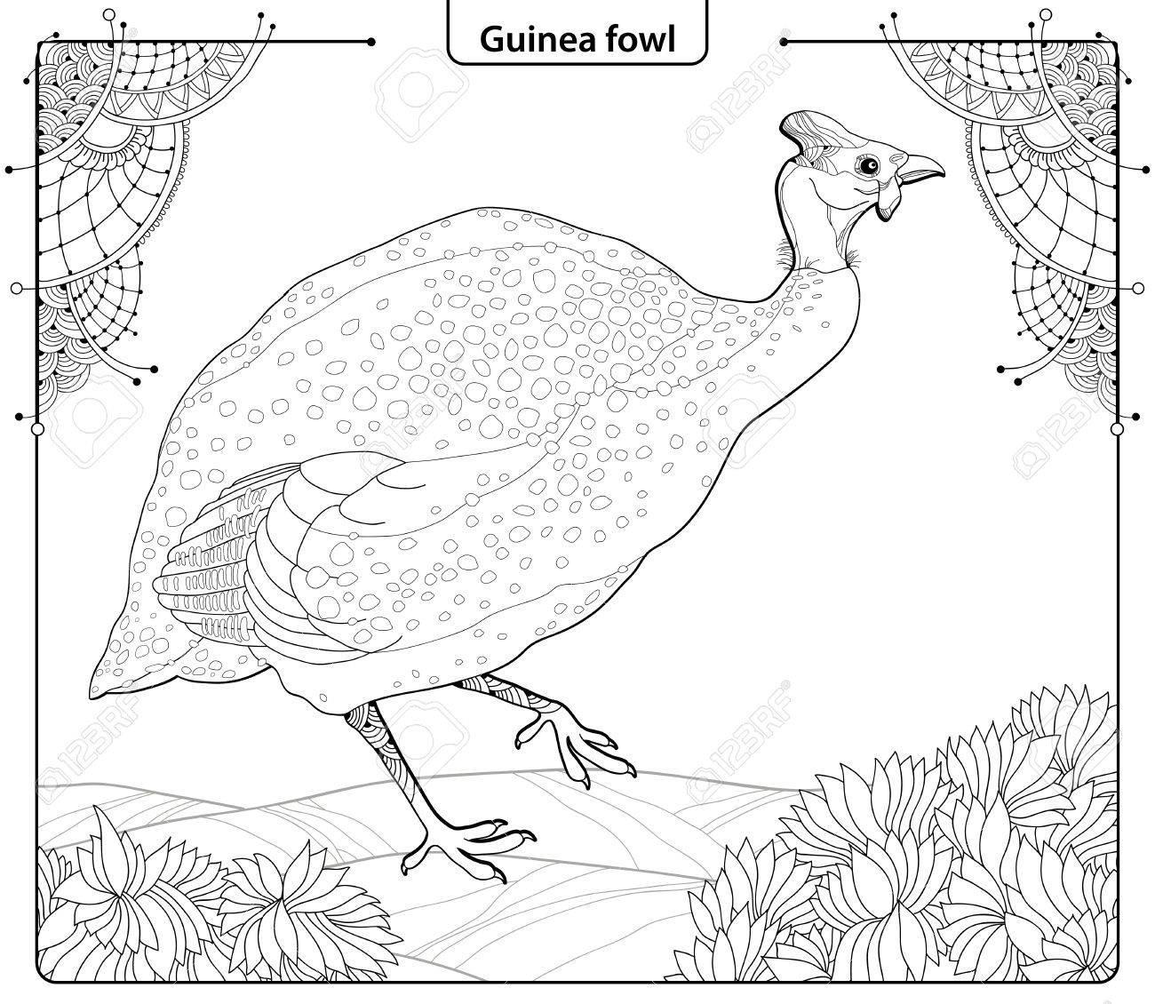 Ilustración Vectorial Con Aves De Guinea En El Estilo De Contorno ...