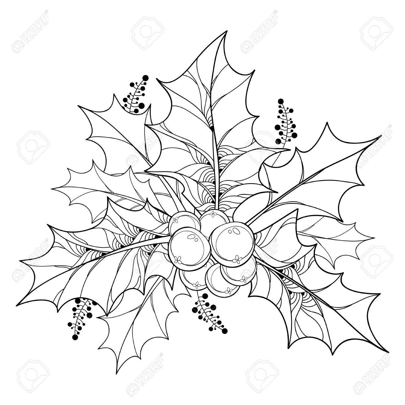Vector Zweig Mit Umriss Blätter Und Beeren Von Ilex Oder