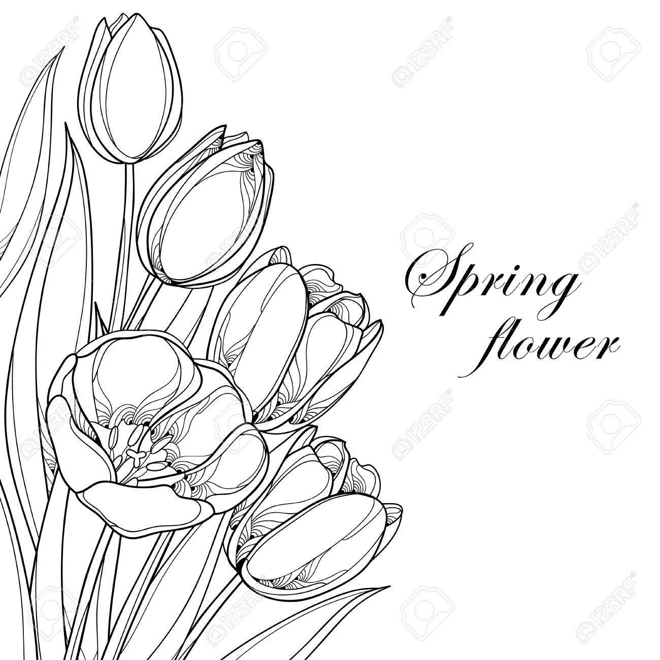 Vector Bouquet Mit Kontur Tulpen Blumen Auf Weiß Isoliert ...