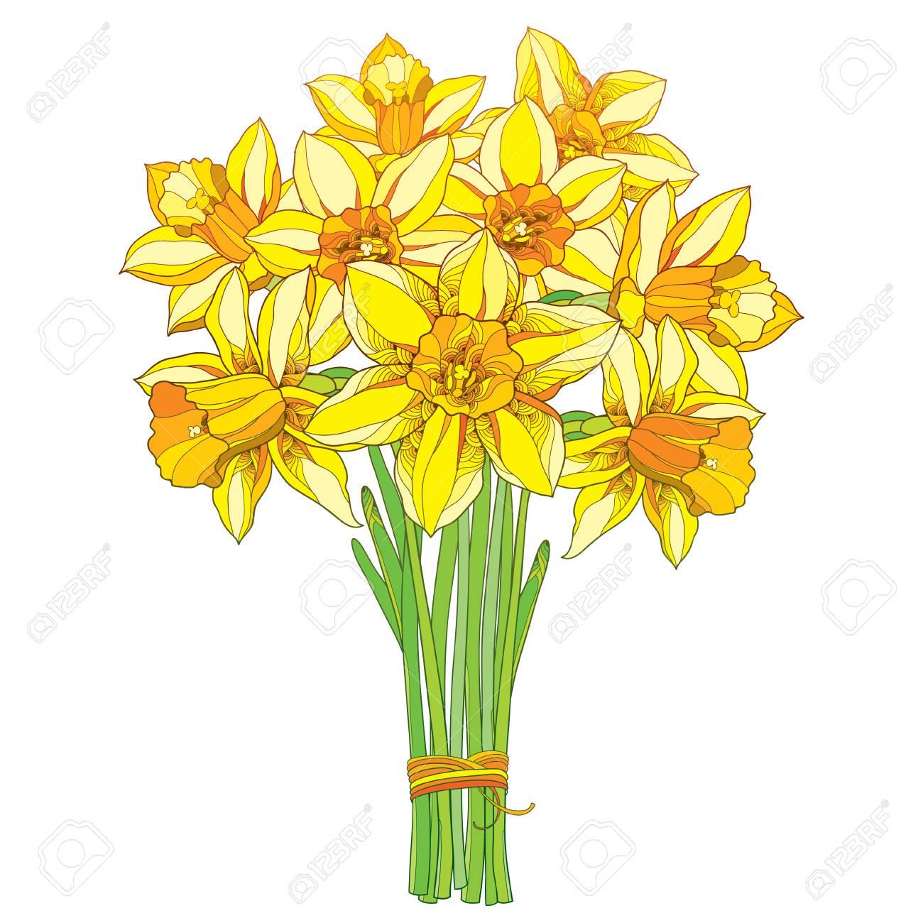 Bouquet De Vecteur Avec Contour Narcisse Jaune Ou Fleurs De