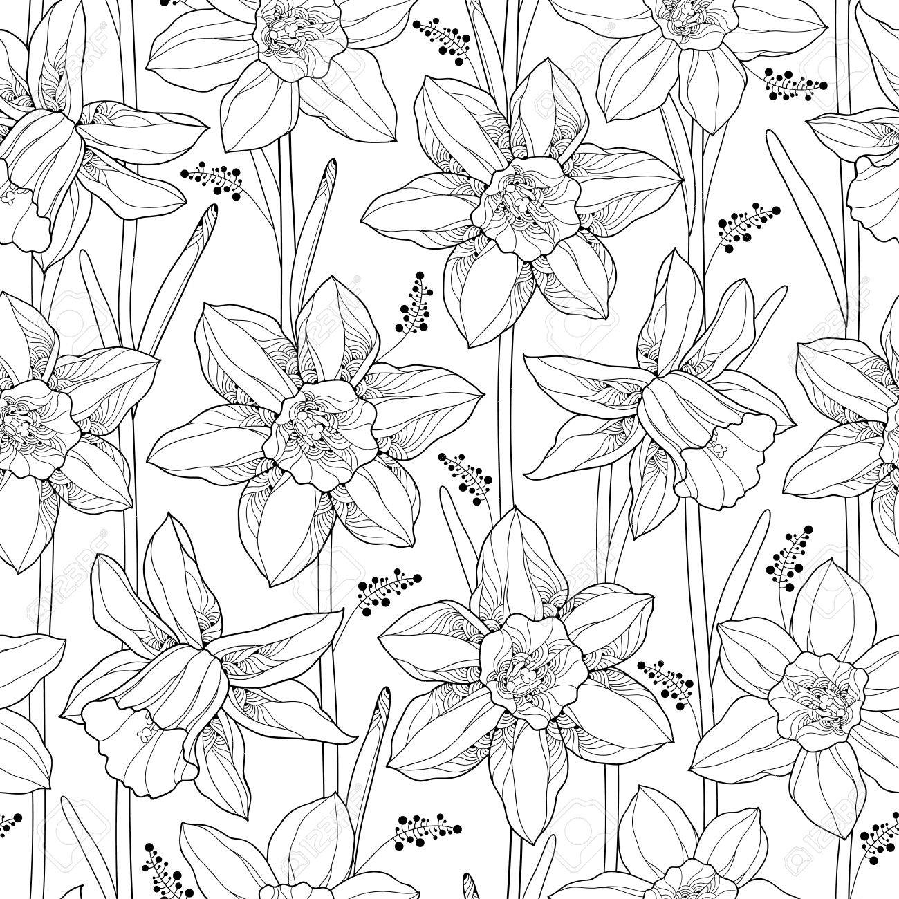 Vector Seamless Pattern With Outline Narcissus Or Daffodil Flower