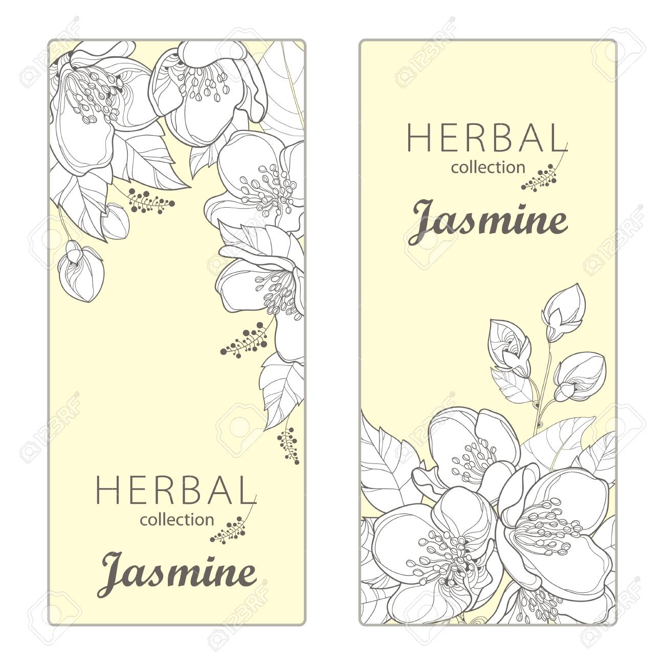 Vertical Templates With Outline Jasmine Flowers Bud And Leaves