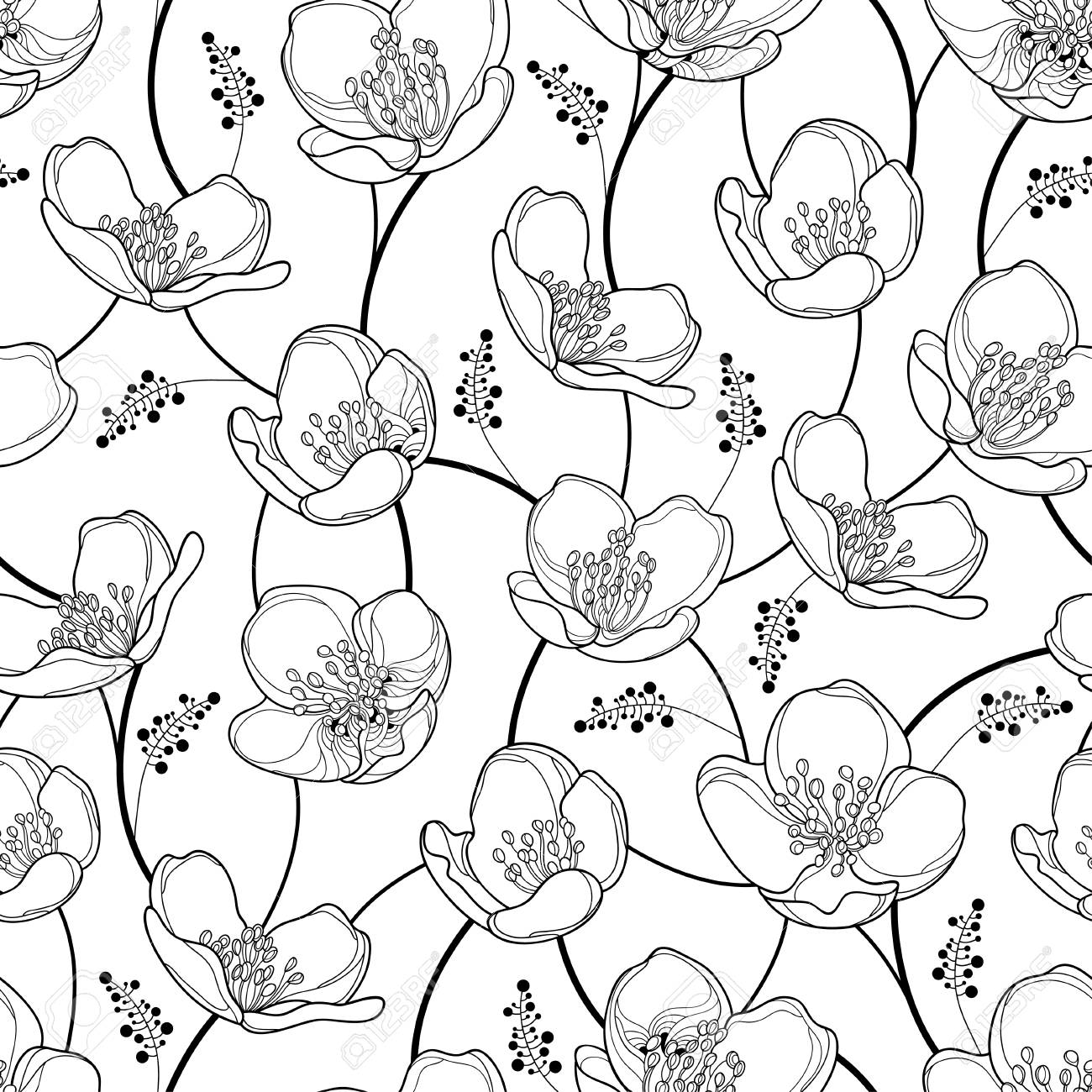 Seamless Pattern With Outline Jasmine Flowers In Black On The
