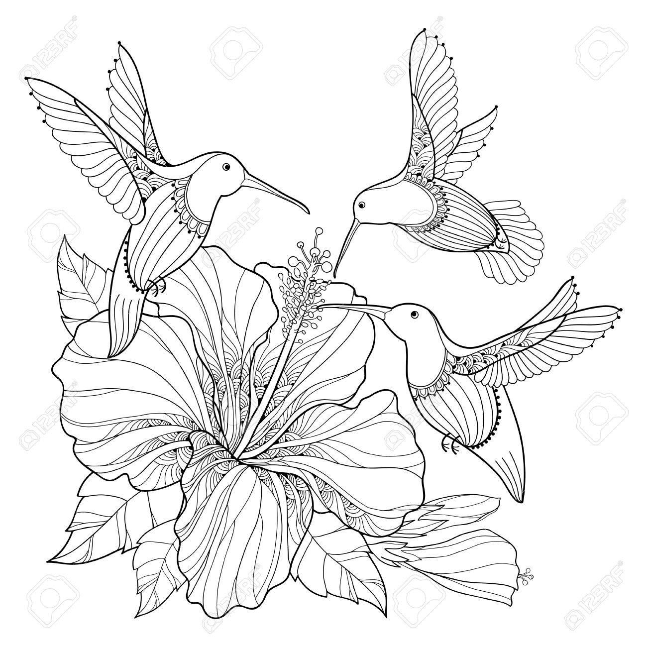 Fliegender Kolibri Oder Colibri Und Aufwändiger Hibiscus Im ...