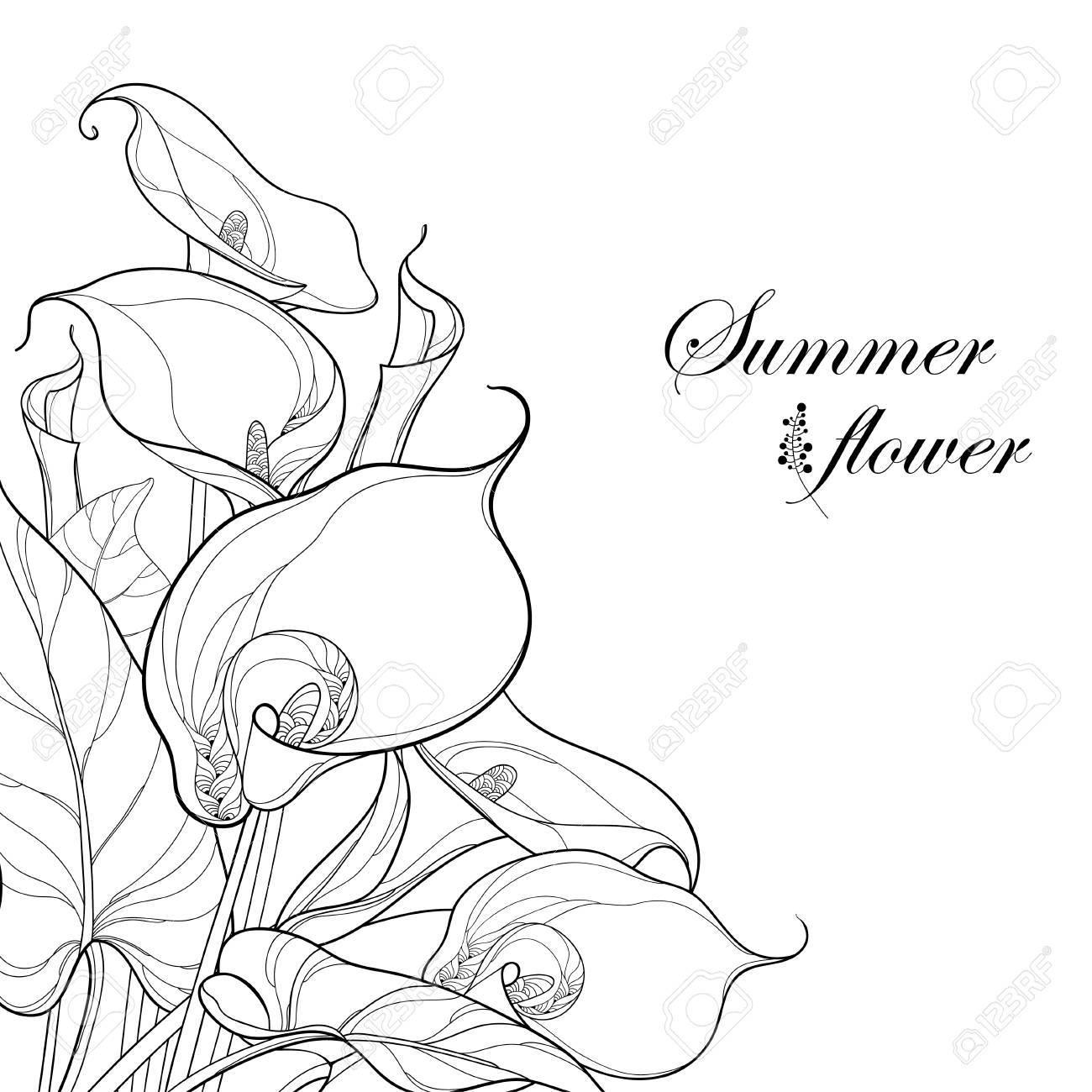 黒白い背景で隔離のオランダカイウユリ花とカラーのブーケ華やかな