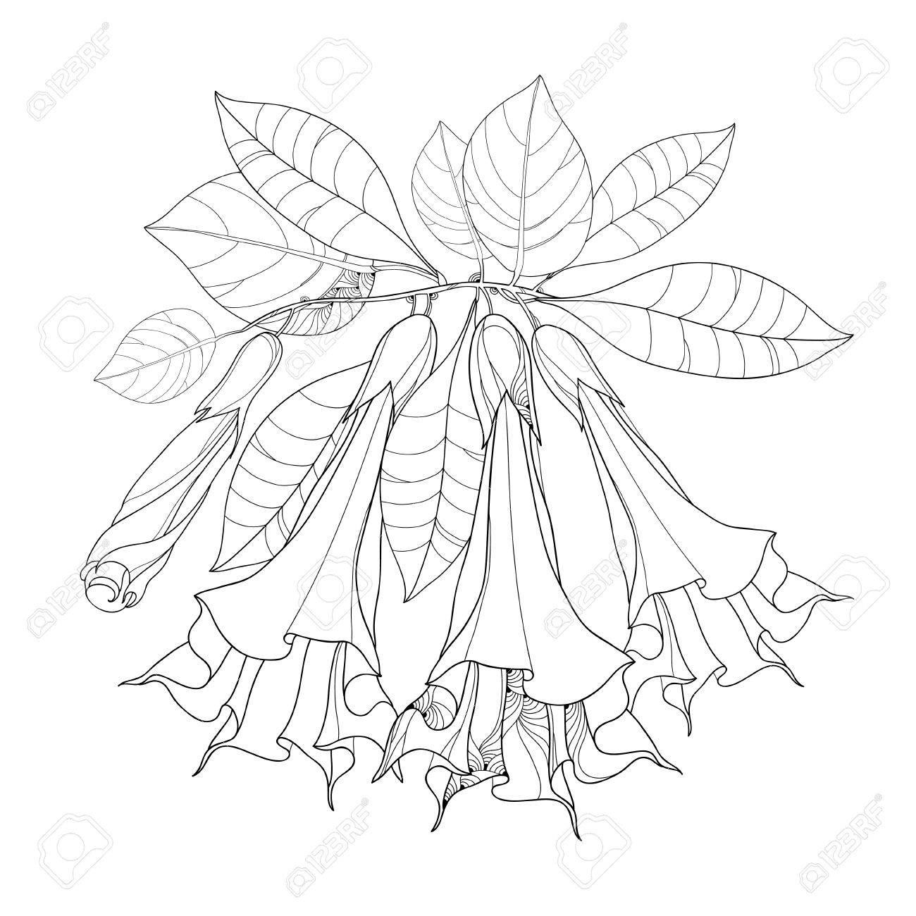 キダチチョウセンアサガオ属アルボレーアまたは天使トランペット概要花