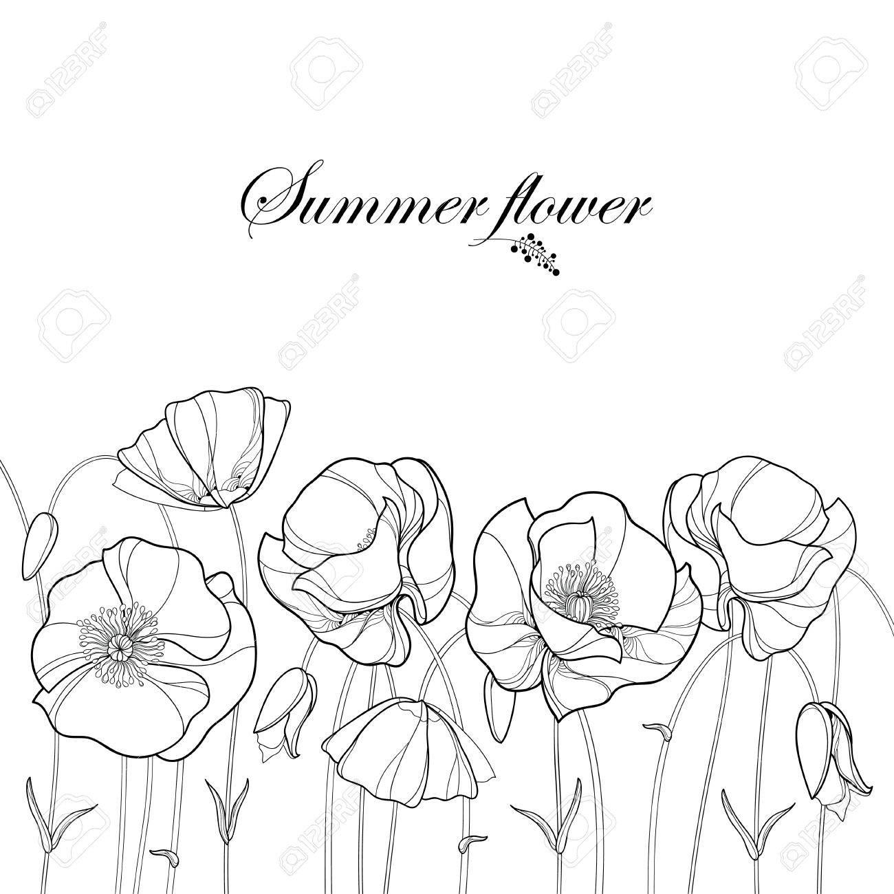 summer border black and white