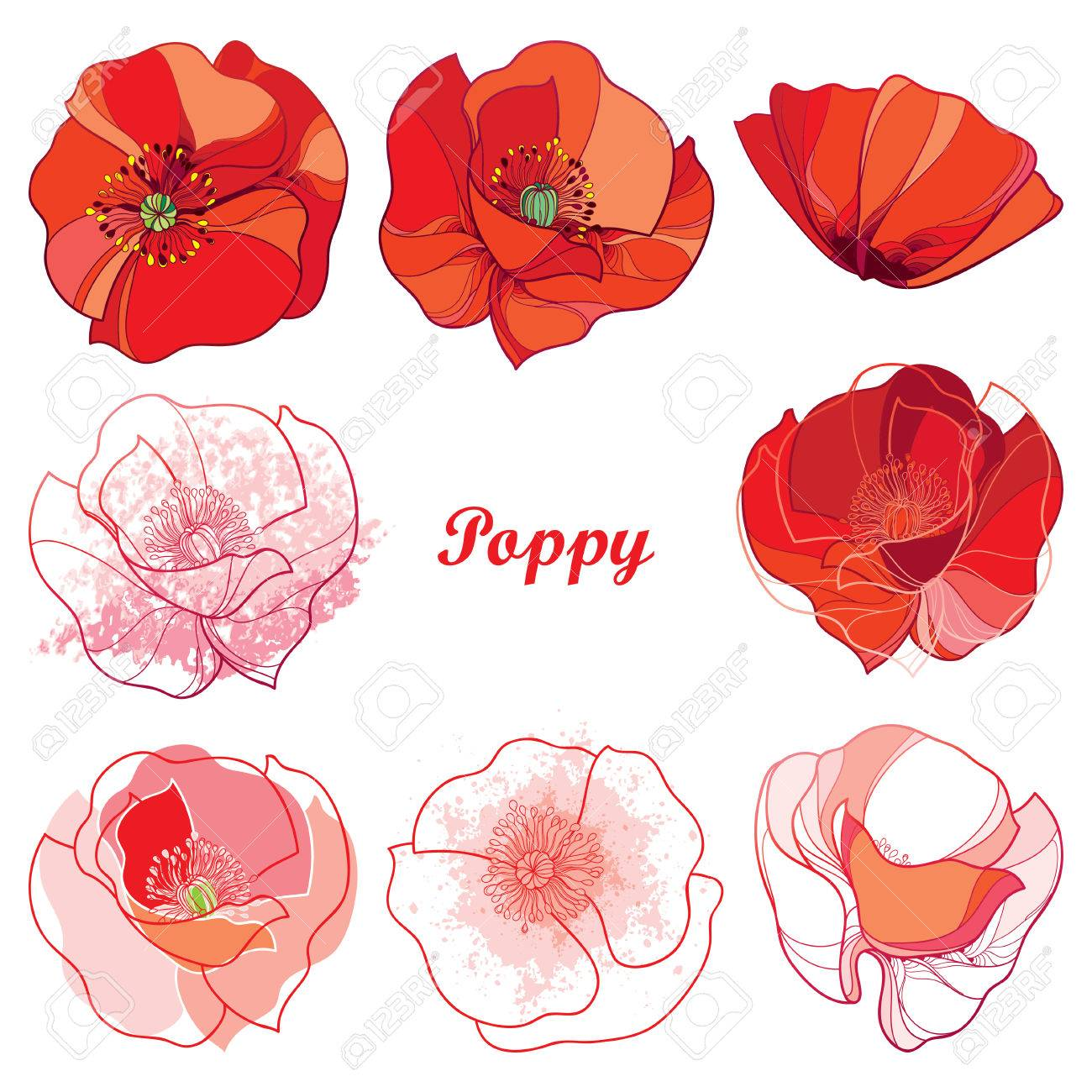Set With Outline Poppy Flower Ornate Flowers In Red White And