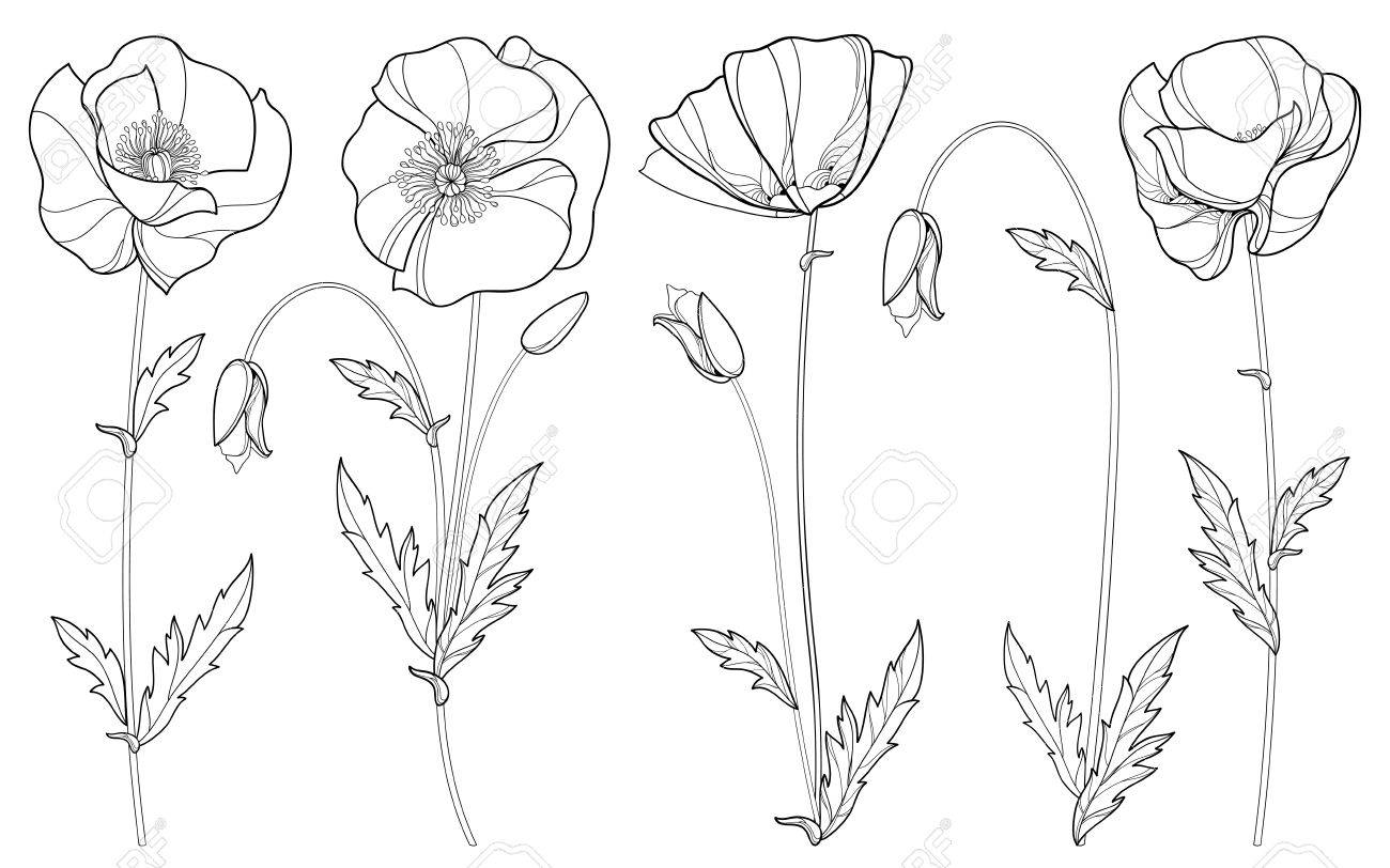 Set with outline poppy flower bud and leaves in black isolated set with outline poppy flower bud and leaves in black isolated on white background mightylinksfo