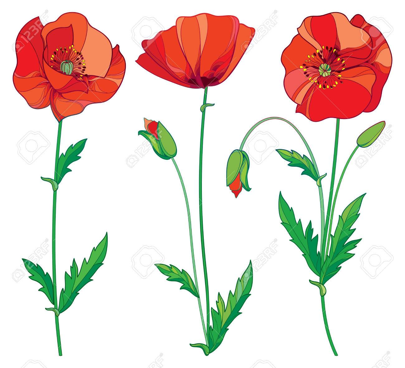 What Is The Meaning Of The Poppy Flower Gallery Flower Decoration