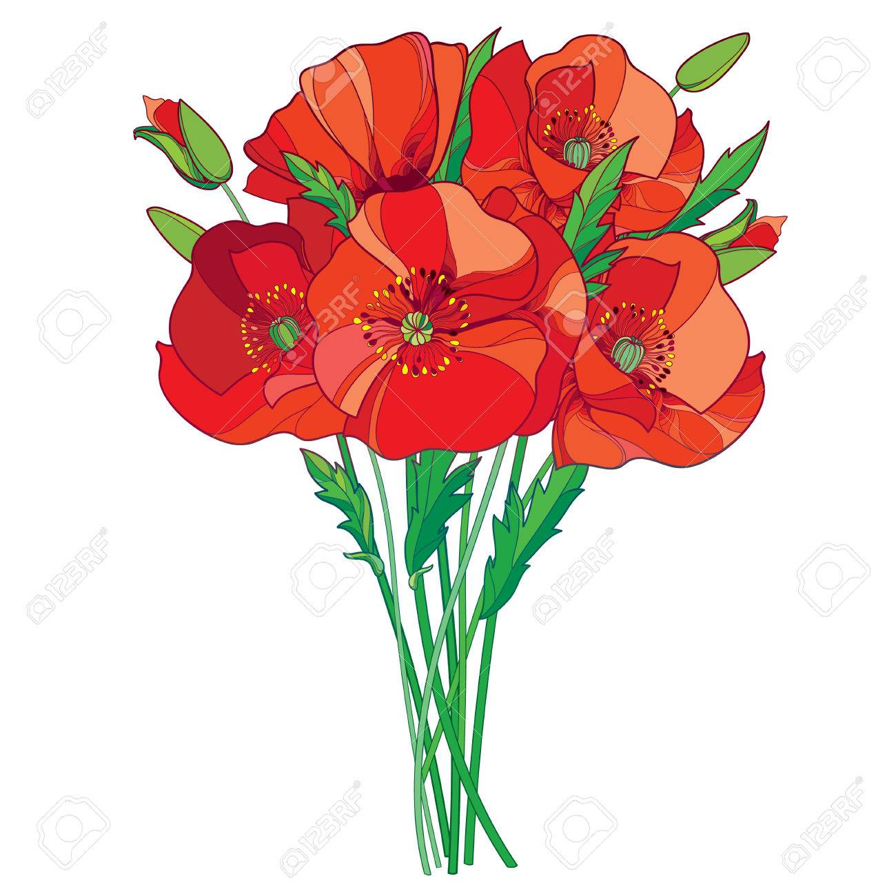 Bouquet with outline red poppy flower bud and green leaves isolated bouquet with outline red poppy flower bud and green leaves isolated on white background mightylinksfo
