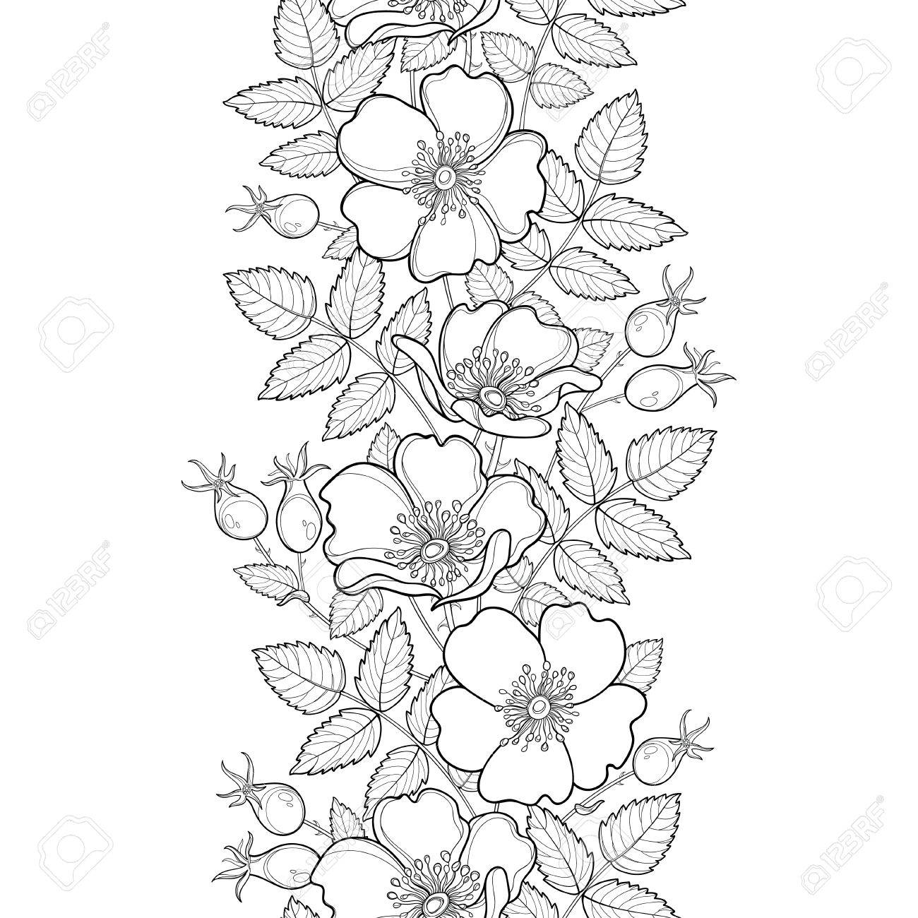 Seamless Pattern With Outline. Flower, Hips And Leaves On The ...