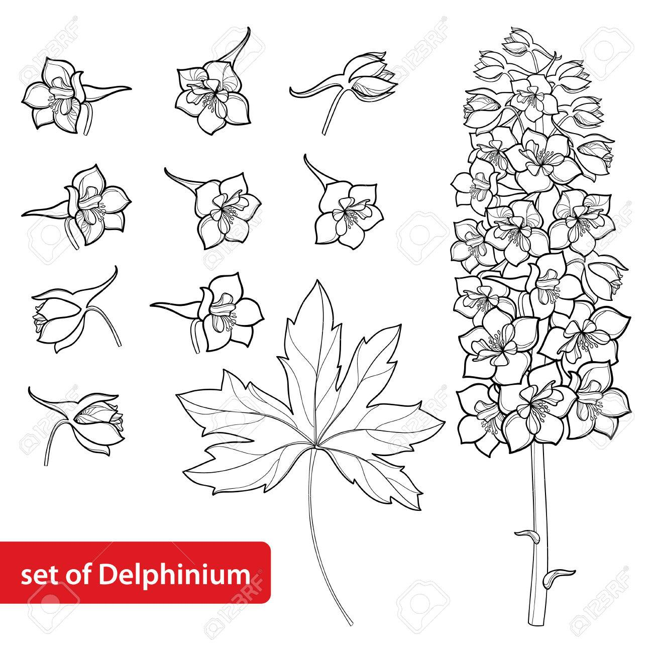 Set with delphinium or larkspur flower bunch bud and leaf set with delphinium or larkspur flower bunch bud and leaf in black isolated mightylinksfo