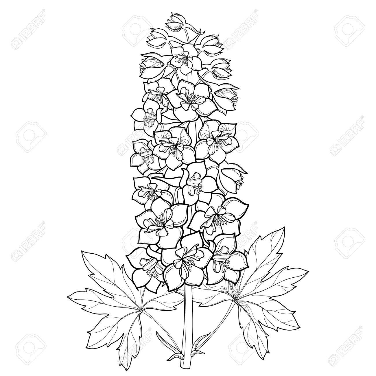 Coloring Page Bunch With Delphinium Or Larkspur Flower Stem Bud And Leaf In Black Isolated
