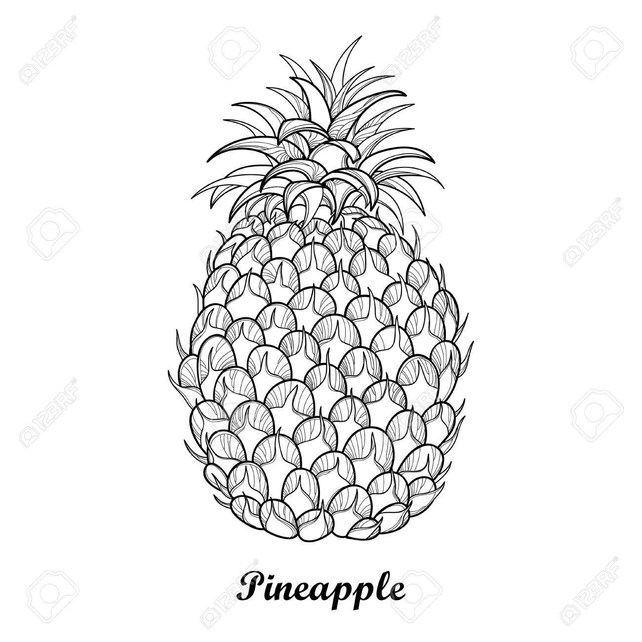 Dibujo Con Contorno Ananas O Piña Frutas Y Hojas En Negro Aislado ...
