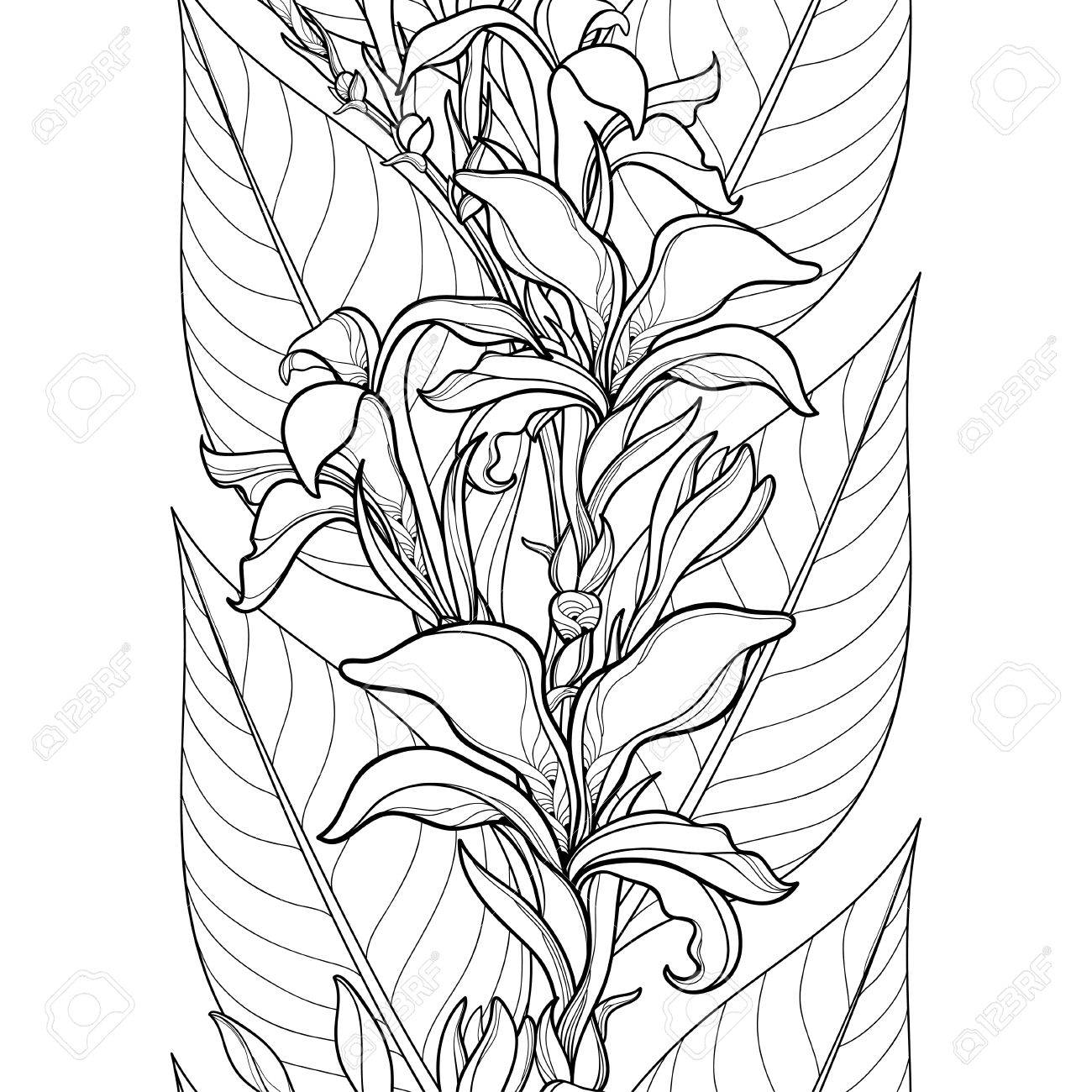 Seamless Pattern With Outline Canna Lily Or Canna Flower And