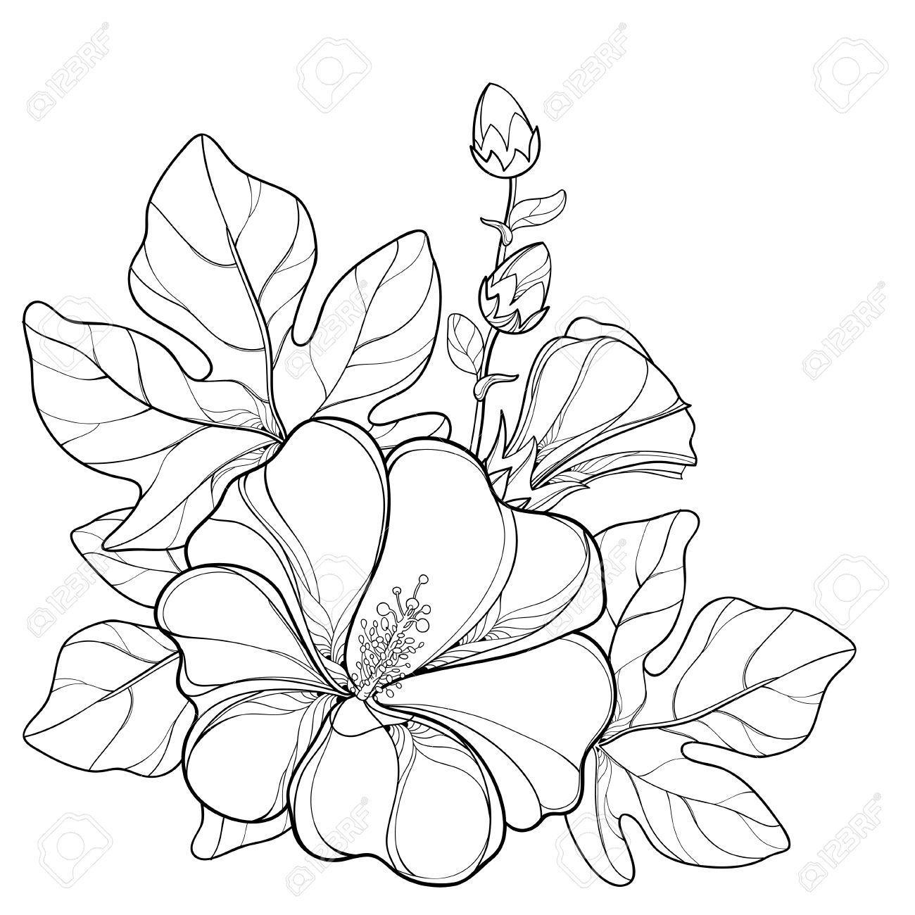 Coloriage Dun Bouquet De Fleurs.Bouquet Au Contour Alcea Rosea Ou Fleur De Hollyhock Bourgeon Et