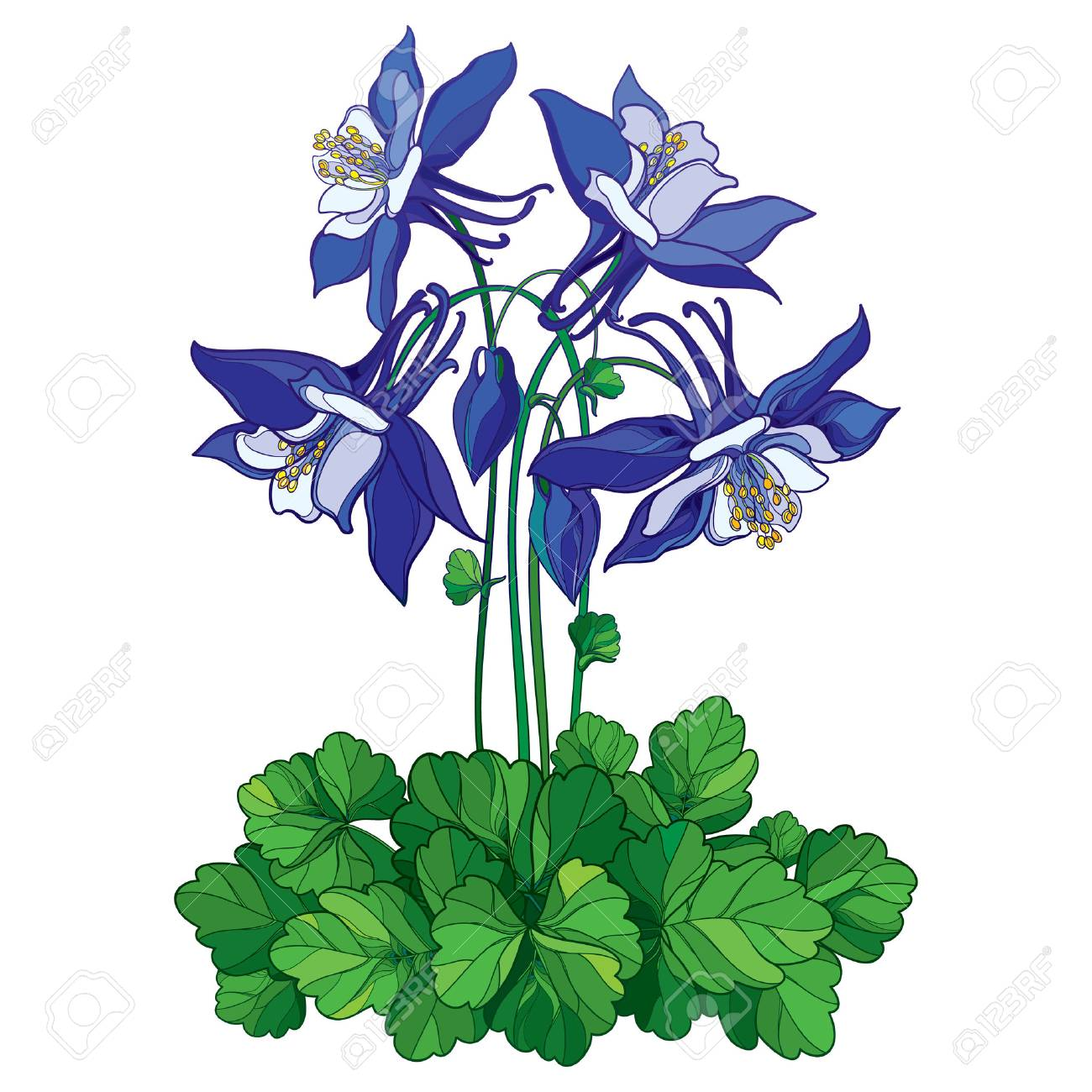 Bouquet With Outline Ornate Aquilegia Or Columbine Flower In