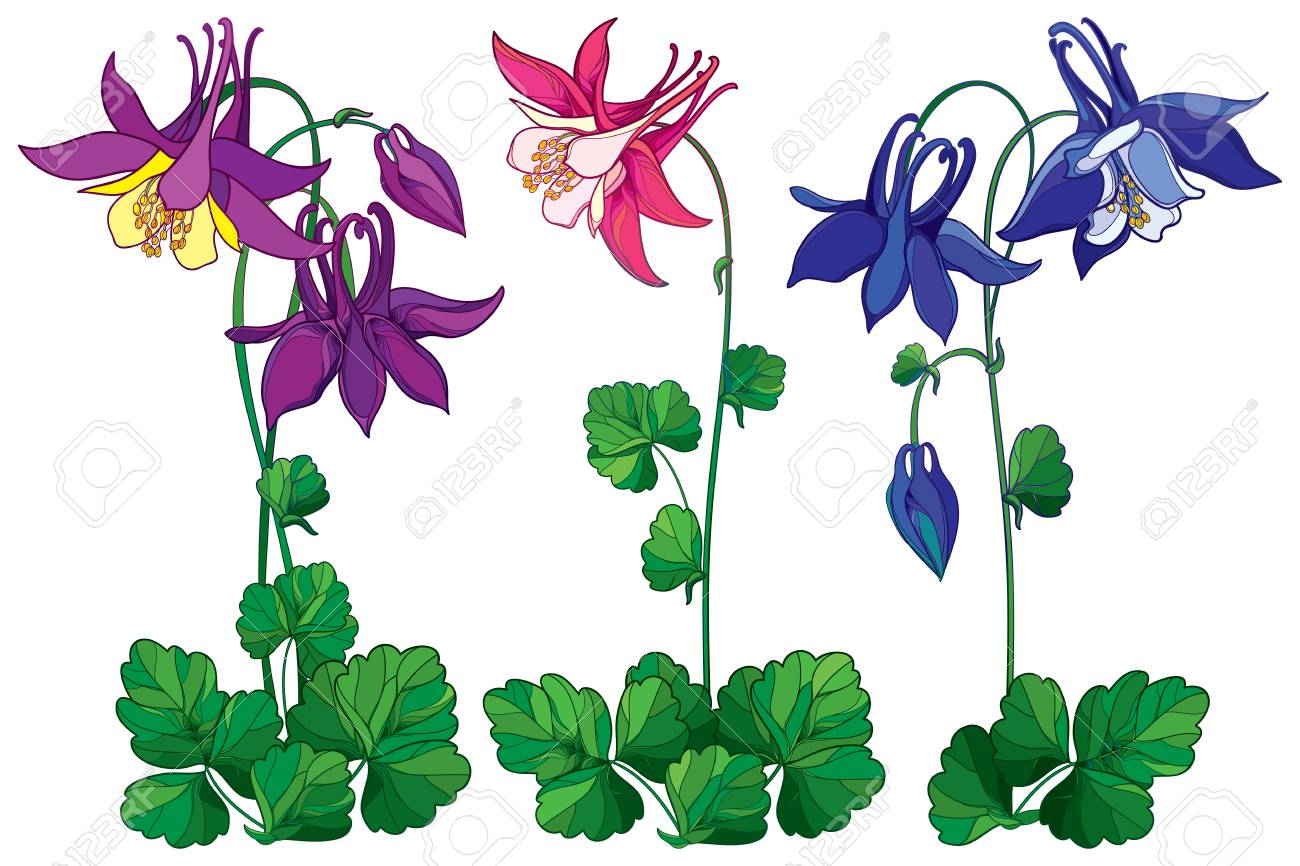 Set with outline ornate aquilegia or columbine flower in pink set with outline ornate aquilegia or columbine flower in pink violet and blue bud izmirmasajfo
