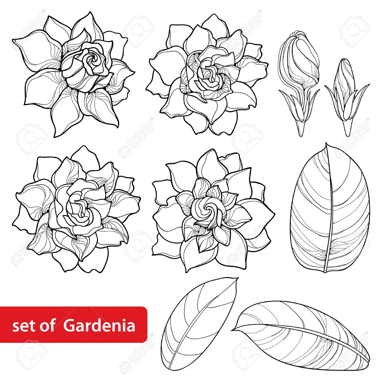 Set with outline Gardenia flower, ornate bud and leaves in black..