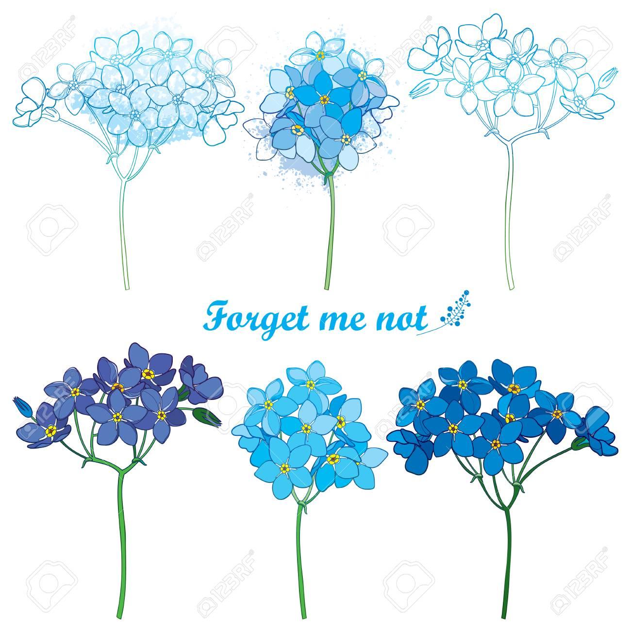 Coloriage Fleur Myosotis.Sertie De Contour Ne M Oubliez Pas Ou Bouquet De Fleurs De Myosotis