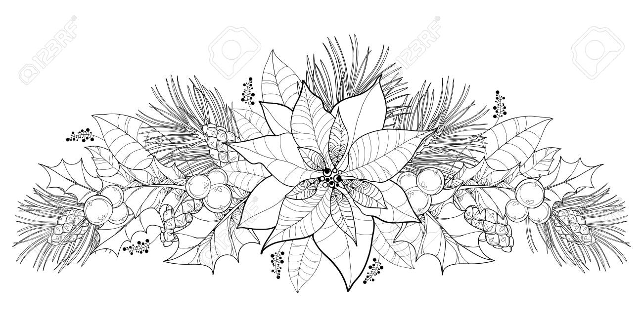 Contour Poinsettia Flower Or Christmas Star In Black Isolated Royalty Free Cliparts Vectors And Stock Illustration Image 92098642