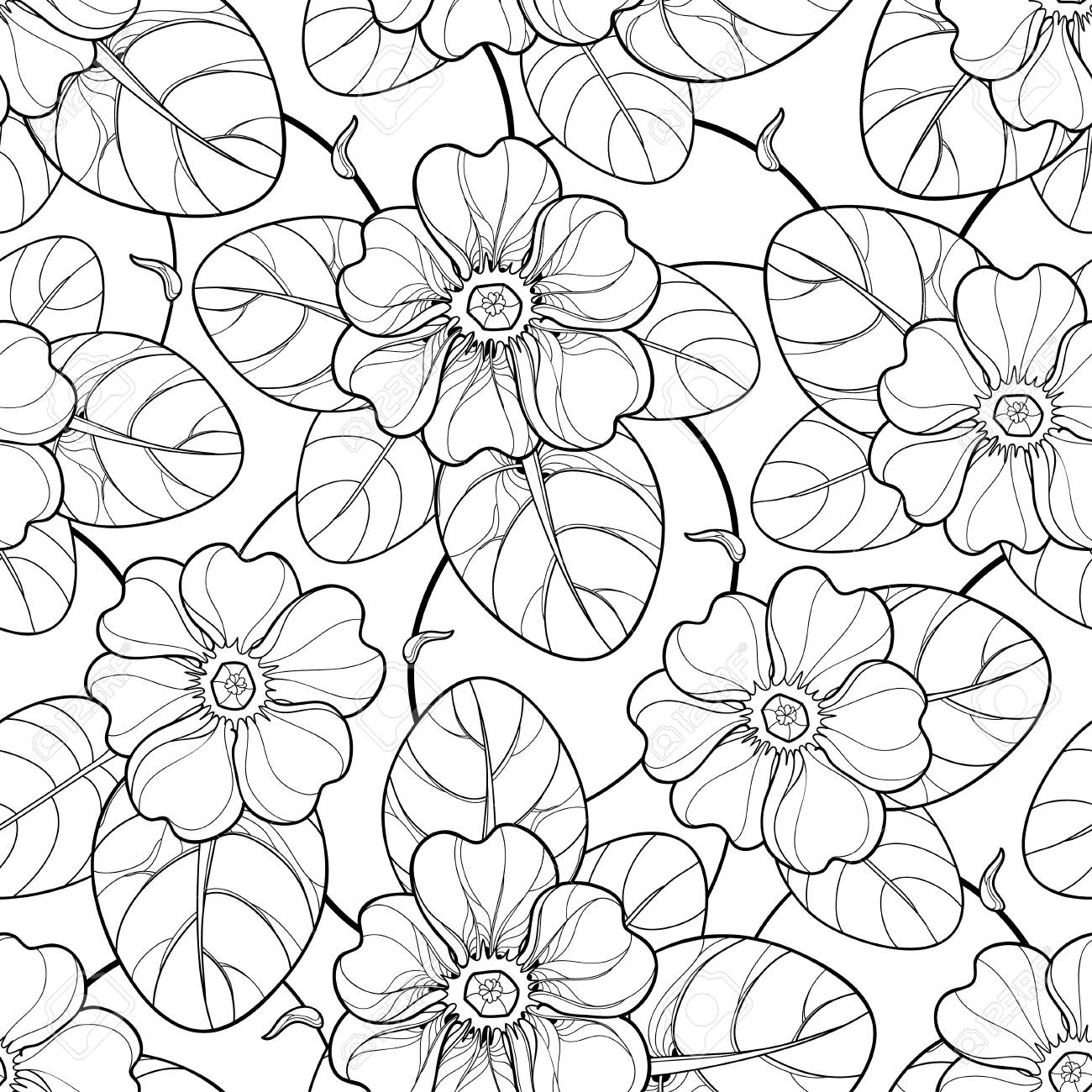 Spring Design And Coloring Book Seamless Pattern With Outline Primula Or Primrose Flower Leaf In Black On The White Background