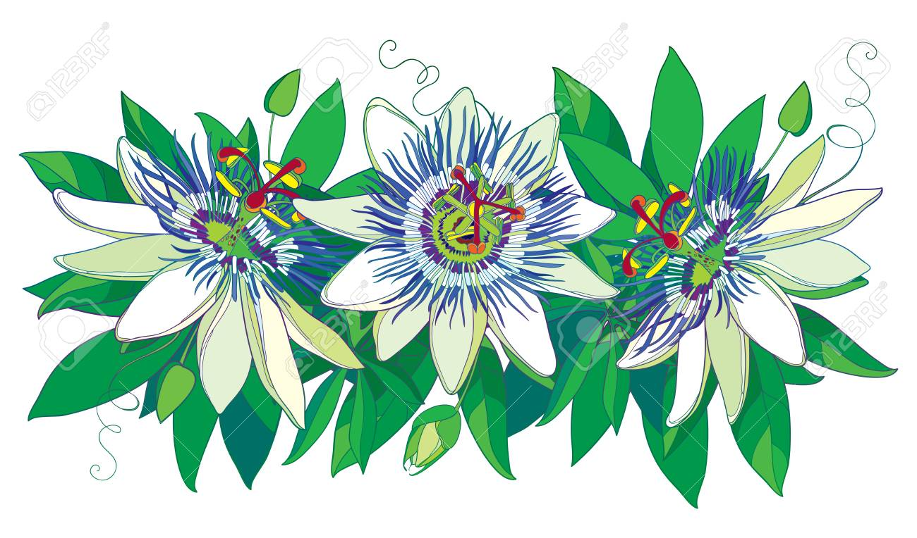 Horizontal Garland With Outline Tropical Blue Passiflora Or