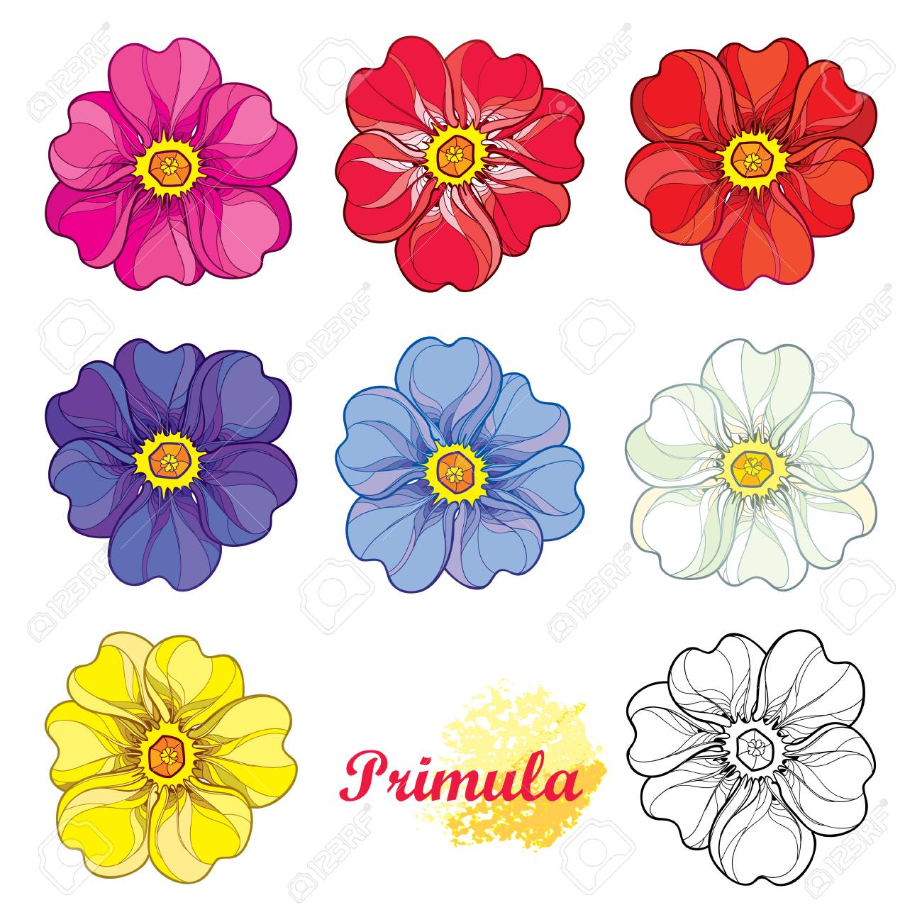 Set With Outline Blooming Primula Or Primrose Flower In Pink