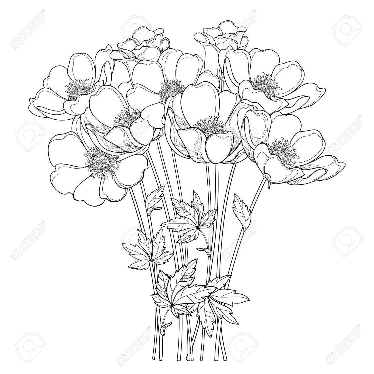 Hand drawing bouquet with outline anemone flower or windflower bud and leaf in black isolated