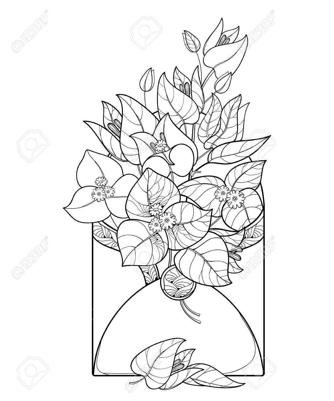 Ornate Bougainvillea For Summer Coloring Book Royalty Free Cliparts Vectors And Stock Illustration Image 120692012