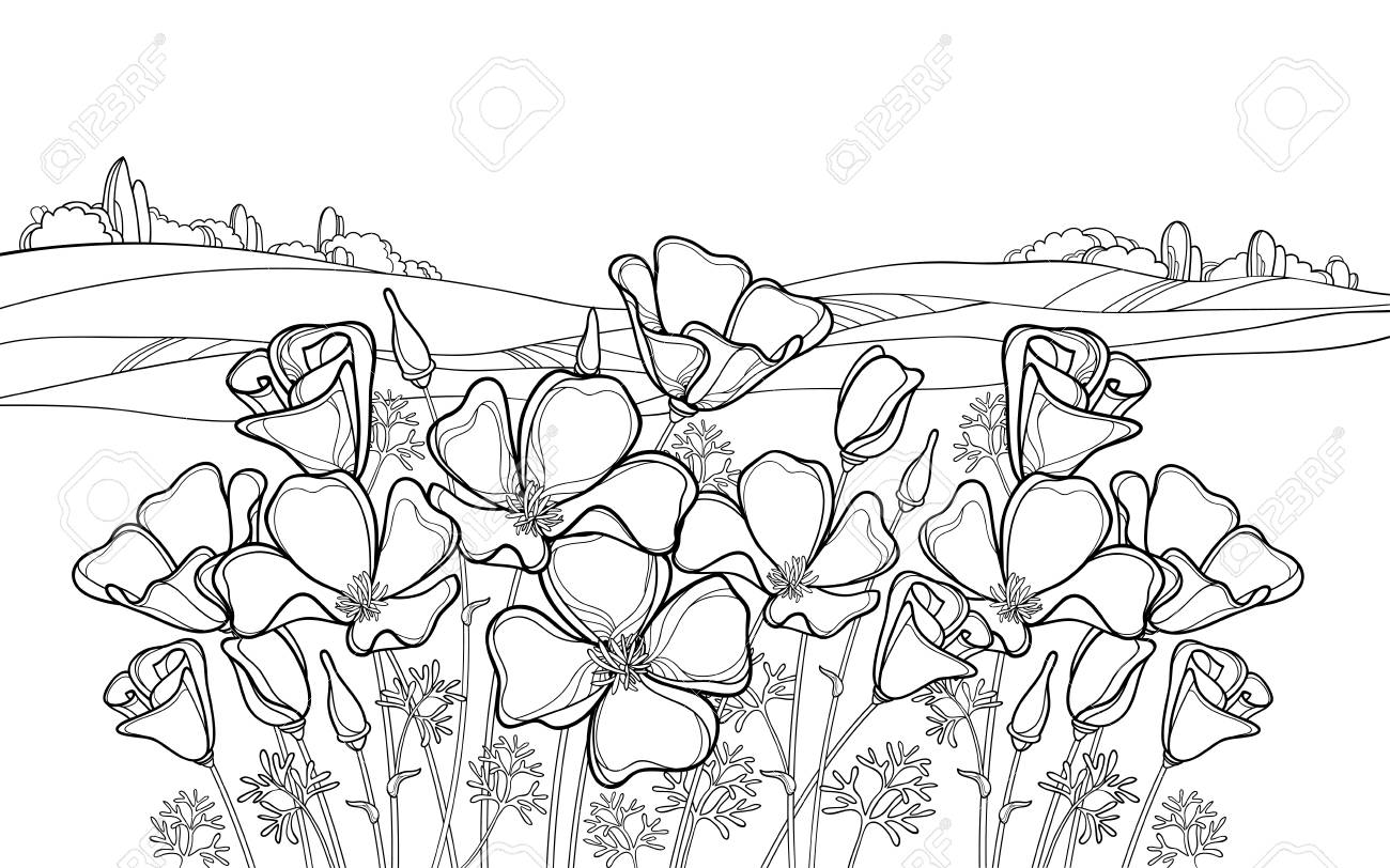 Landscape with California poppy for summer coloring book.