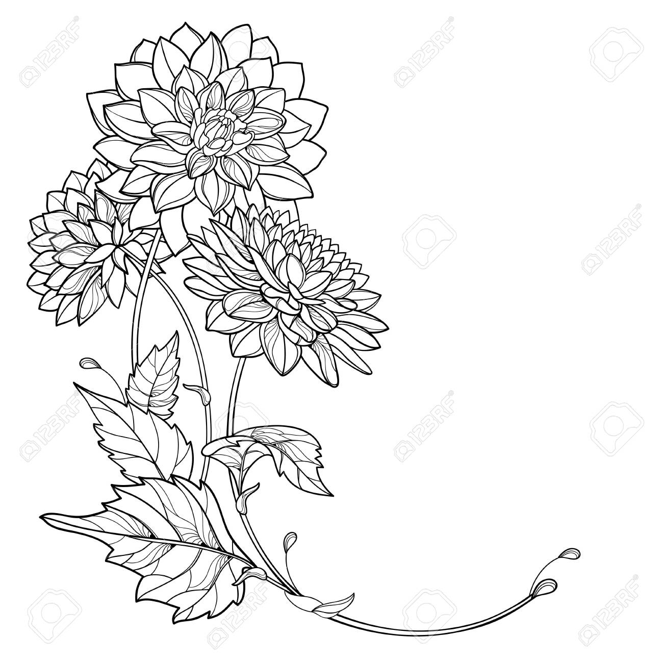 CLIPART DAHLIA FLOWER SKETCH STYLE | Royalty free vector design | Flower  sketches, Flower art, Flower drawing