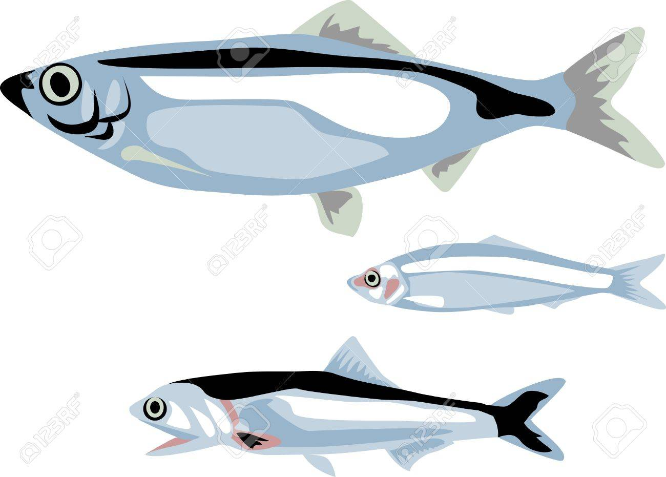 herring, sprat and anchovy fish Stock Vector - 14738609