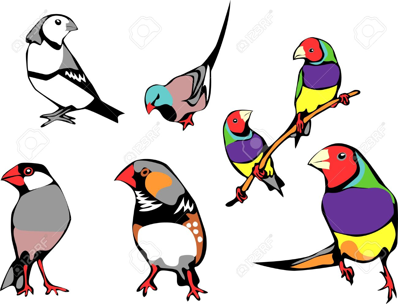 pet finches Stock Vector - 20243717