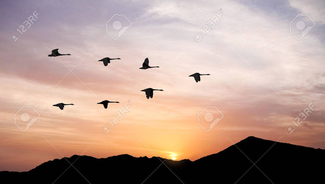 Flying birds across the hill panoramic view - 61186104