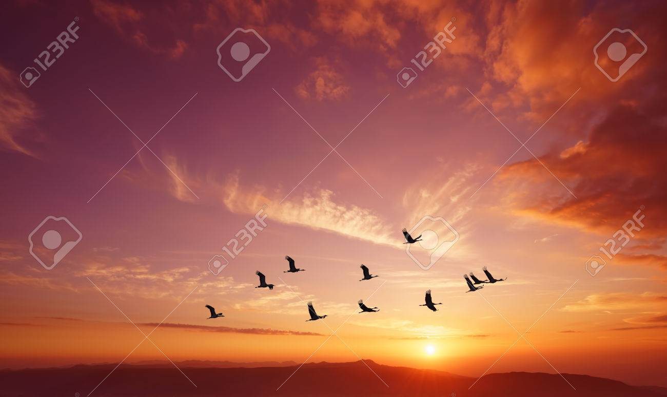Birds flying against evening sunset in the background environment or ecology concept - 65223505