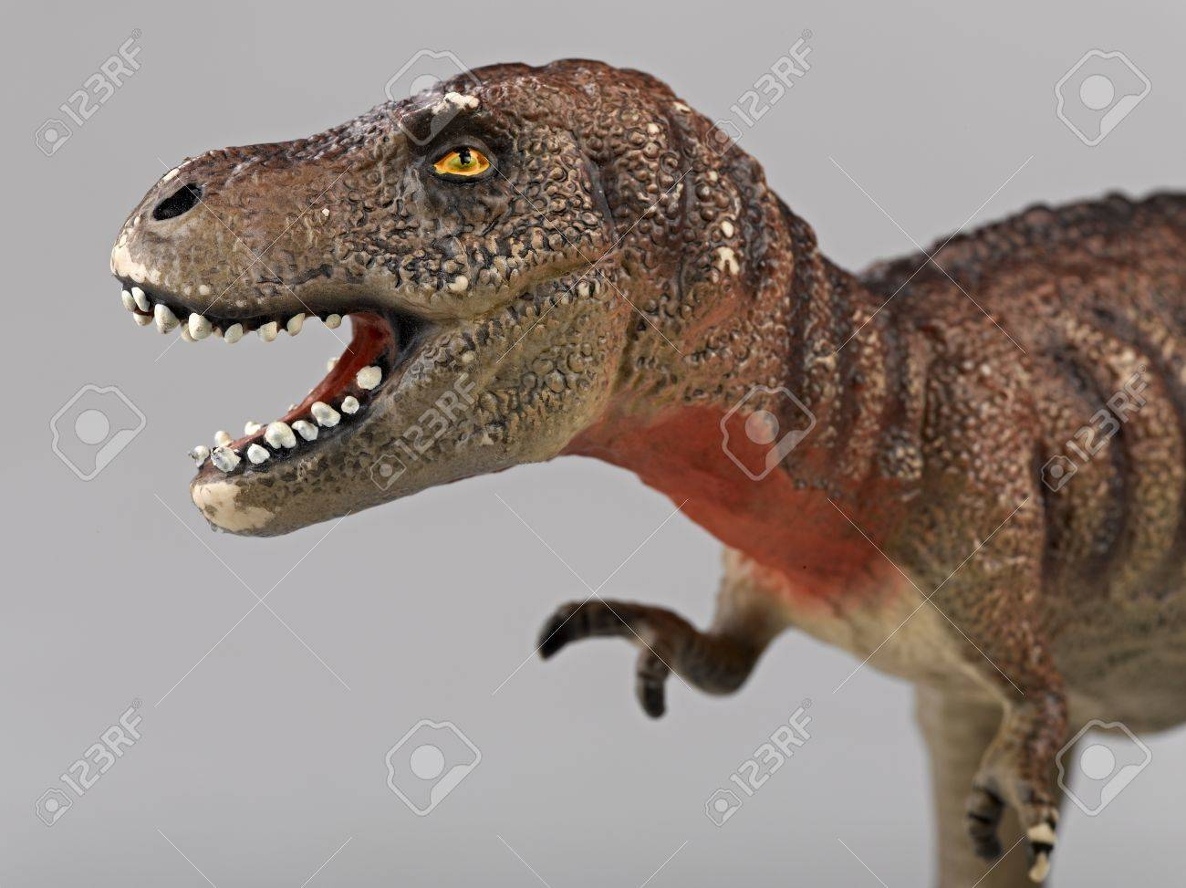 Tyrannosaurus Rex Side View Stock Photo Picture And Royalty Free Image Image 17388400