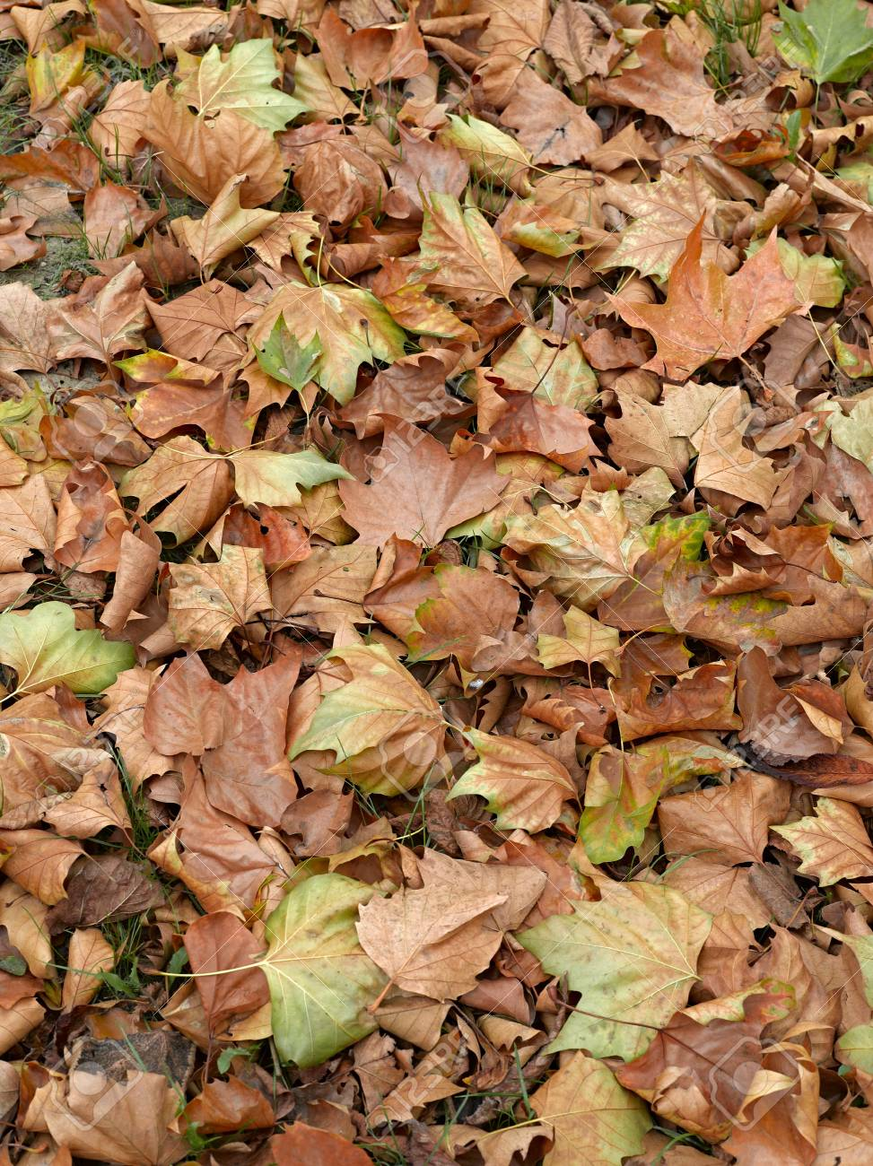 Dead leaves shot ideal for backgrounds and textures Stock Photo - 19376041