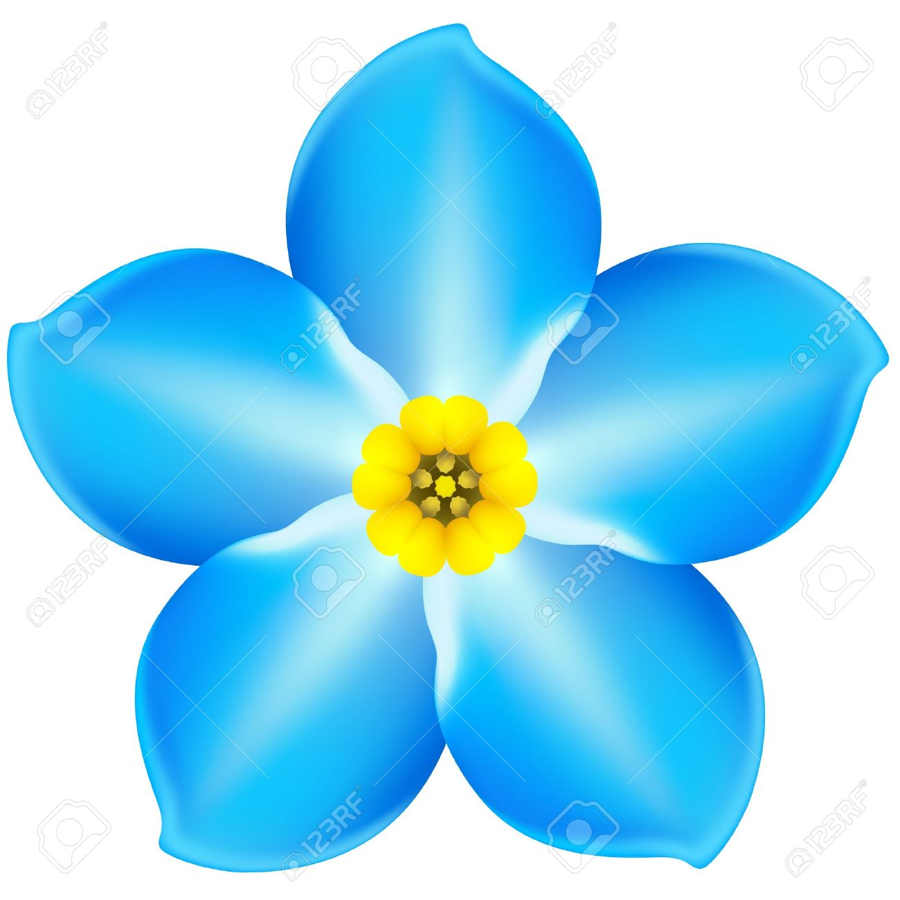 vector illustration blue forget me not eps 10 rgb created rh 123rf com forget me not border clip art Forget Me Not Outline