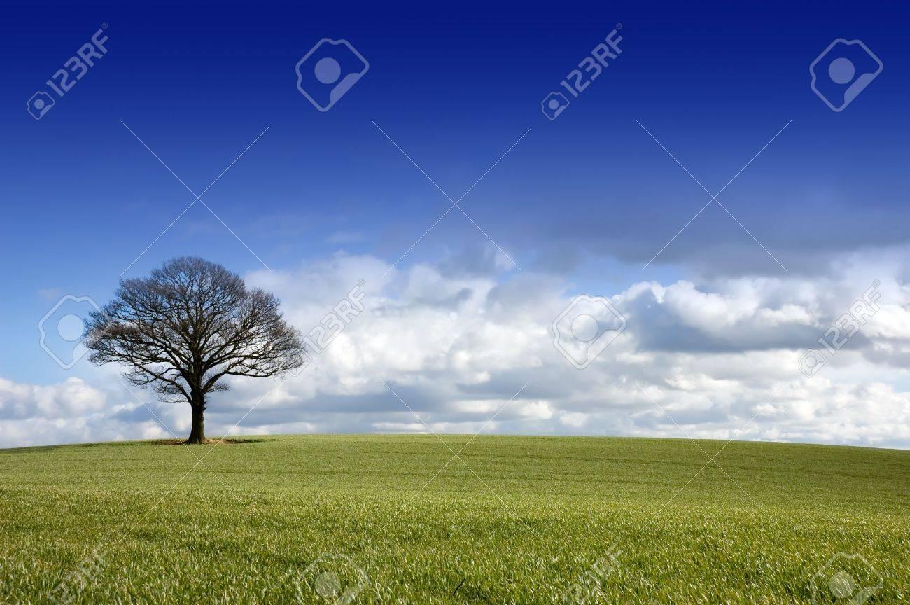 banque dimages paysage anglais rural dhiver dun arbre simple sous un ciel bleu dramatique avec les nuages dapproche sur lhorizon - Arbre Ciel