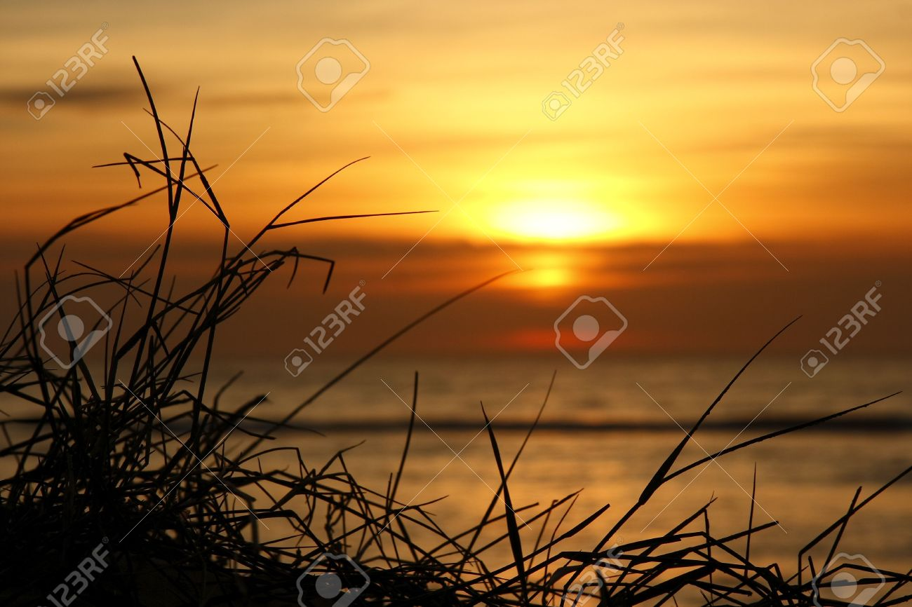 Beautiful Sun Rising In The Background With Grass In Focus Stock