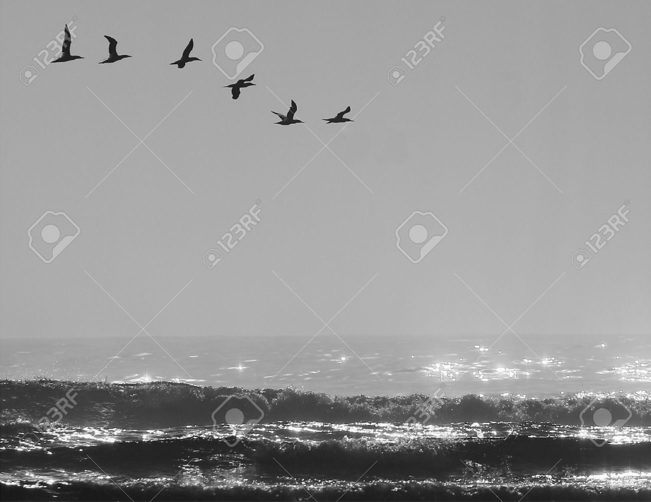 shimmering sea with a small flock of birds flying above Stock Photo - 8748072