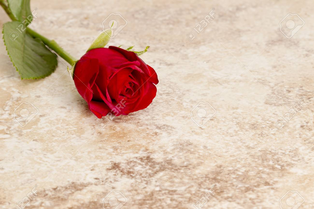 red rose on a tile representing a sign of love and friendship Stock Photo - 25276758