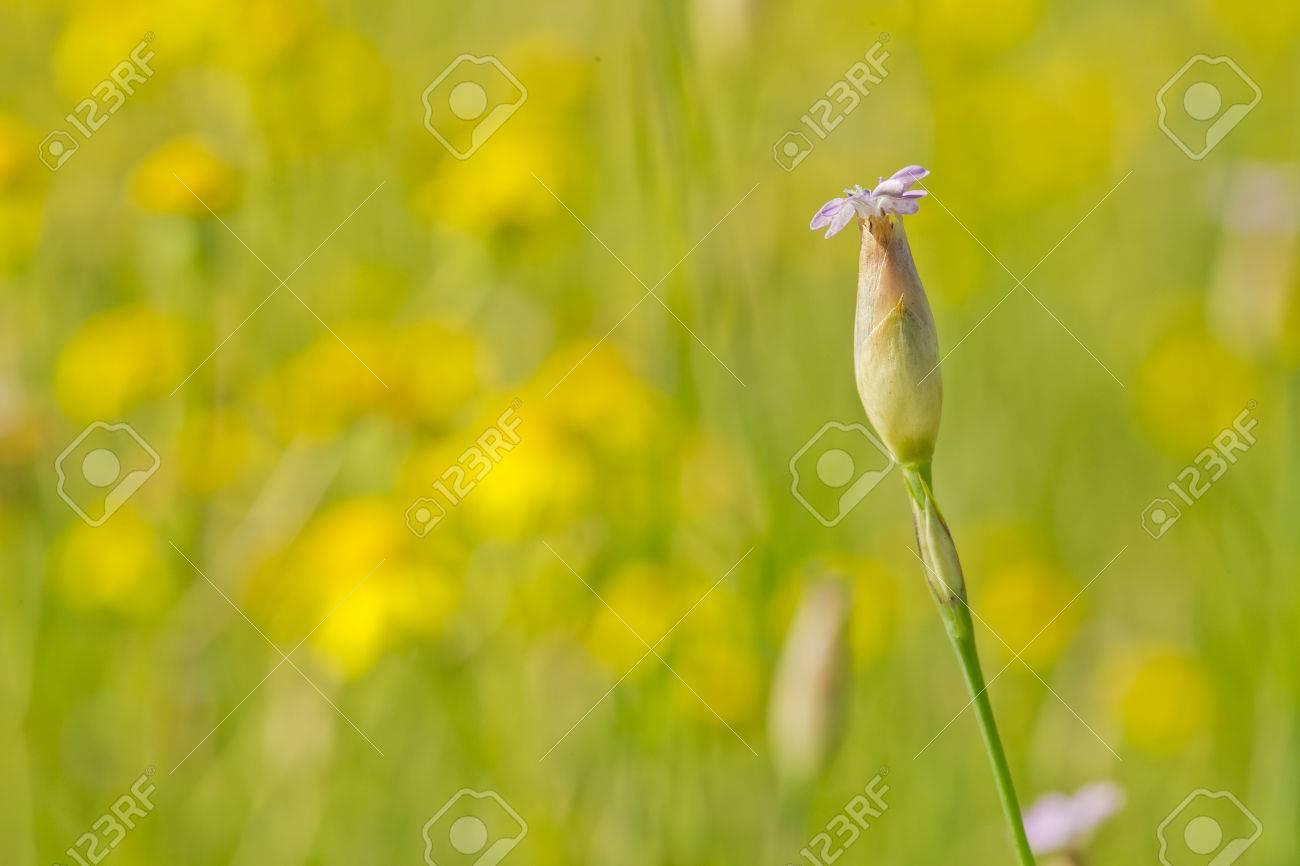 Hermosa Planta Silvestre Con Una Flor Púrpura En Un Campo En Una ...