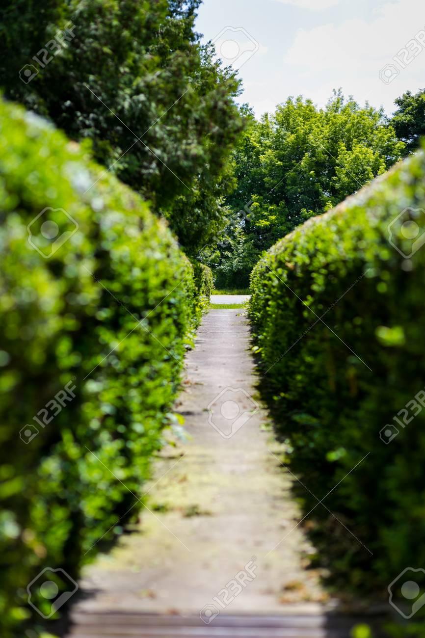 hecken, sträucher, hecken, sträucher, ein zaun von büschen